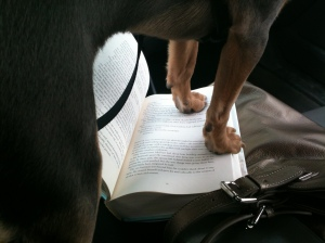 Tiberius on my book